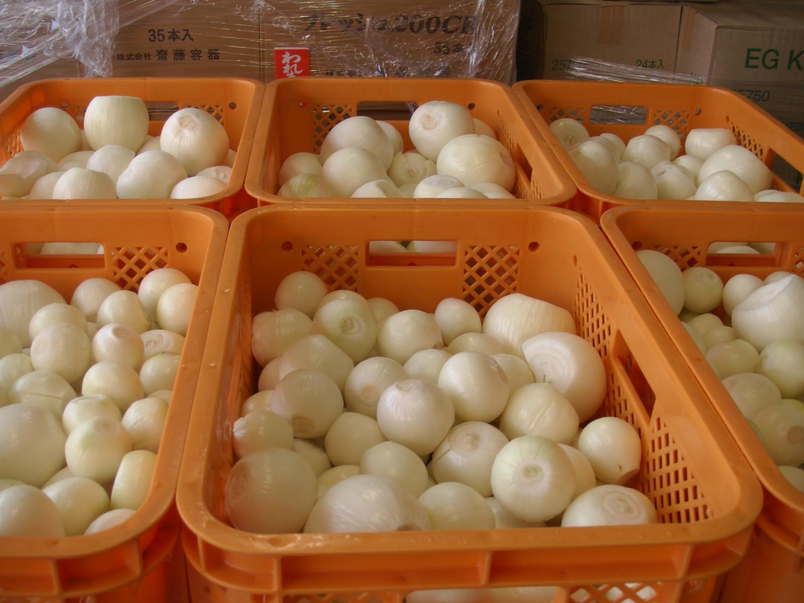 佐賀県産玉葱
