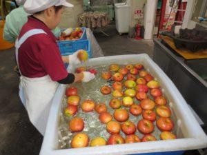 りんご酢へ使用する青森県産りんご