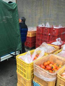 純柿酢へ使用する熟した柿の仕入れ