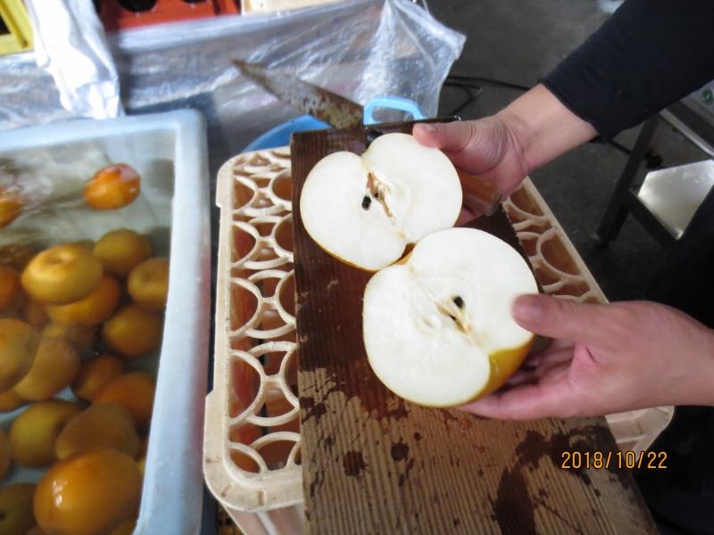 梨酢へ使用する「梨」綺麗な梨です。