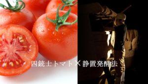 四銃士トマト×静置発酵法02