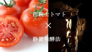 四銃士トマト×静置発酵法
