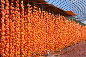 佐賀県大和町干し柿