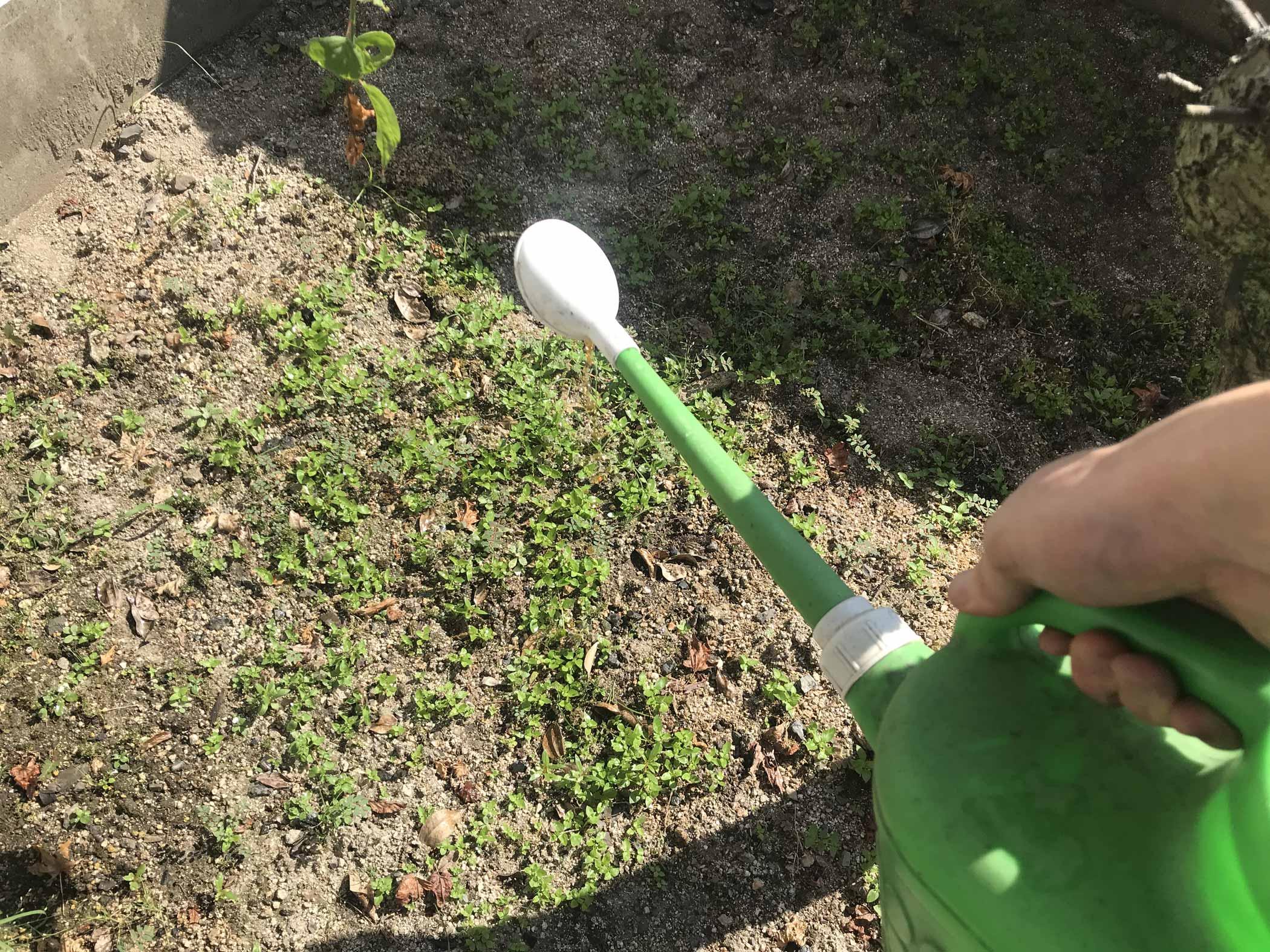 天然の除草剤を撒布
